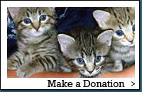 img_donate