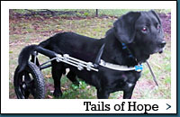Read Tails Of Hope Stories