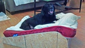 Benny-bed
